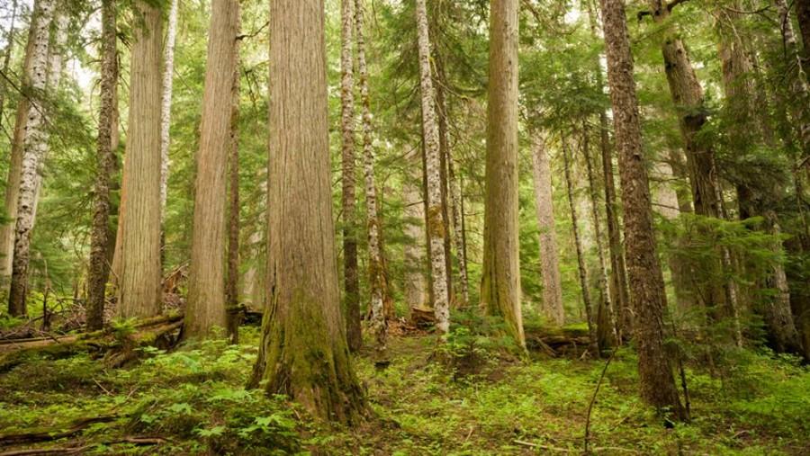 Az erdők védelmében