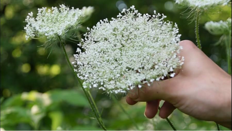 Mérgező növények – Te tudod, melyikkel vigyázz?