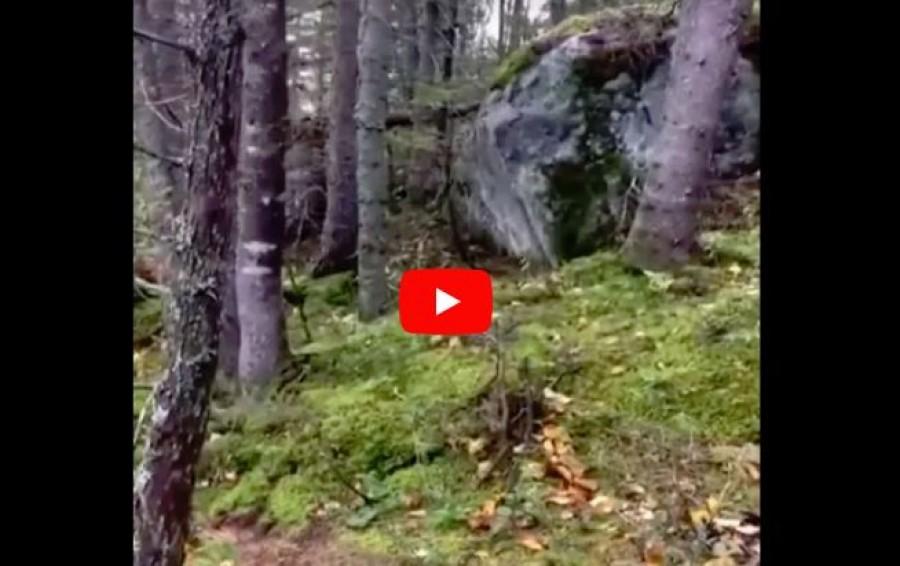 Páratlan felvétel: az erdő talaja úgy mozgott, mintha egy hatalmas tüdő lenne.