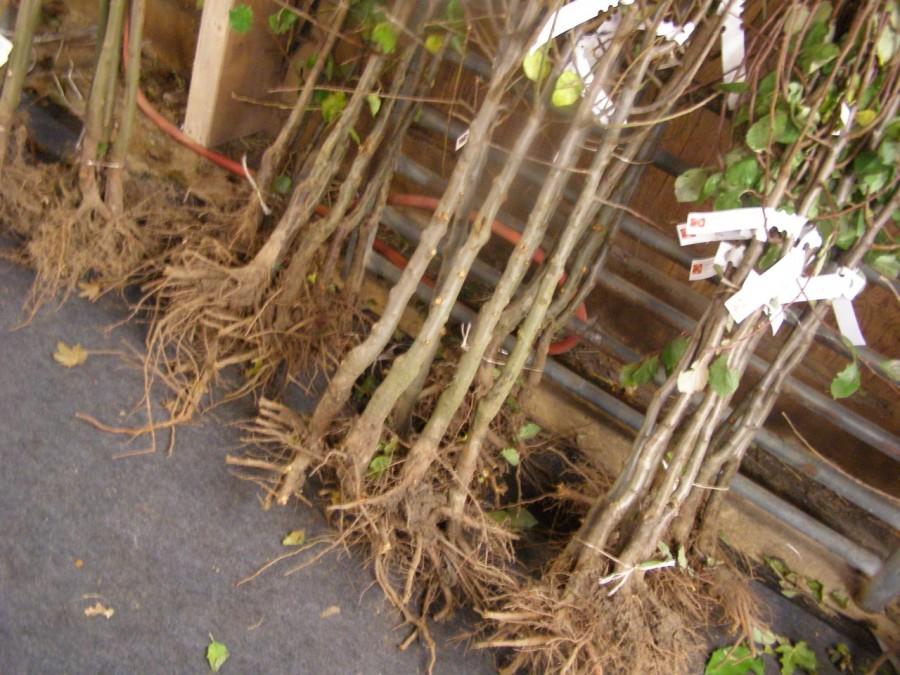 Facsemetéket ad örökbe a helyieknek egy cserkeszőlői erdész