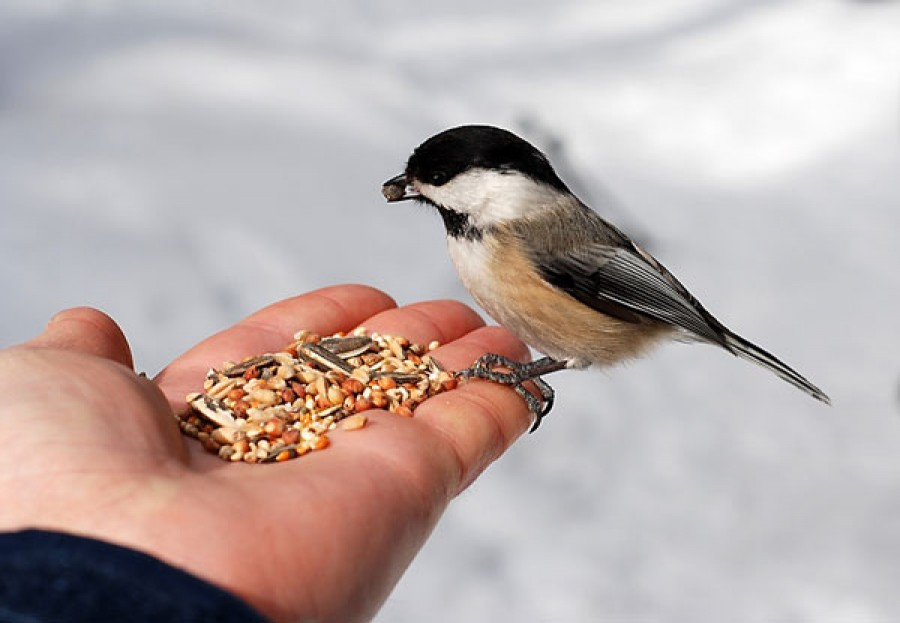 A téli madáretetés életet ment!
