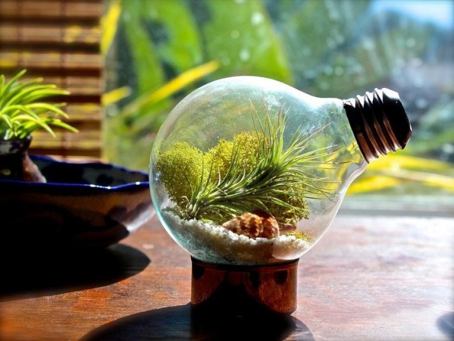 Csodálatos minikert villanykörtében!