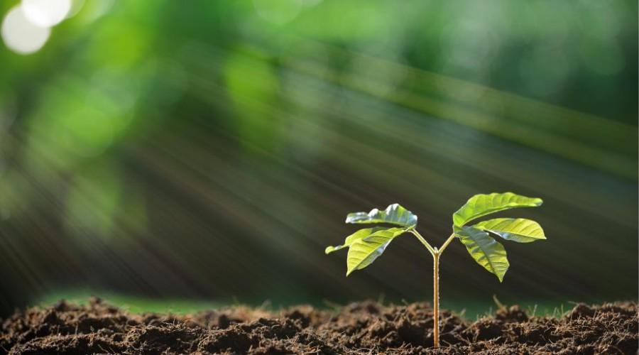 Mit számít a talaj?