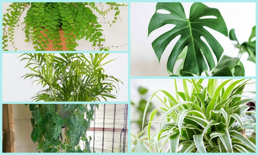 Váltosztassuk zölddé a téli szürkeséget