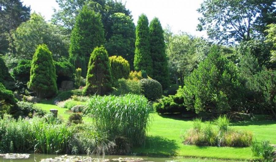 A dekoratív örökzöldek télen-nyáron díszítik a kertünket!