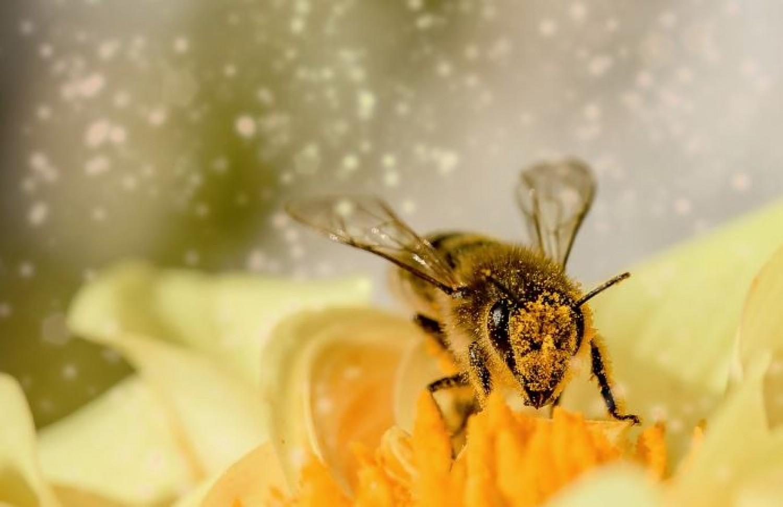 Így óvhatjuk meg nélkülözhetetlen segítőinket, a méheket