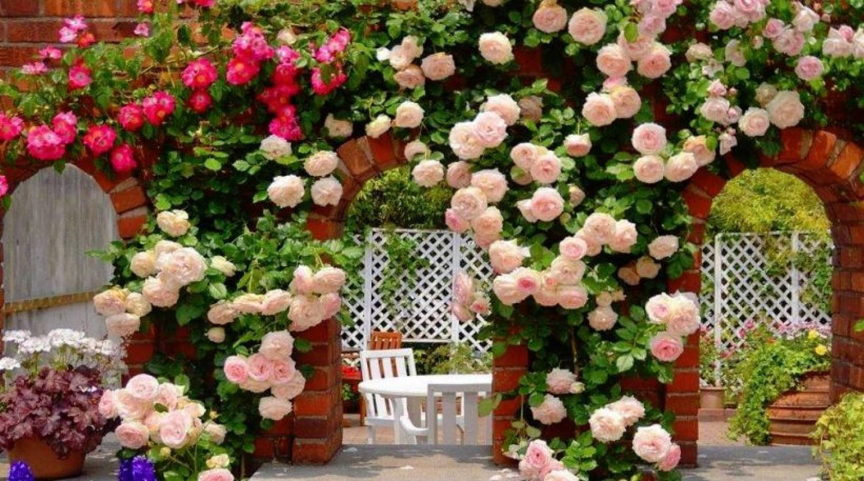 Ezt teheted a növényeid dúsabb virágzásáért - a sikeres kertészek három titka