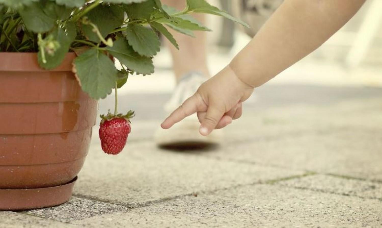 Allergiás lennél az eperre? Ilyen tüneteket okozhat.