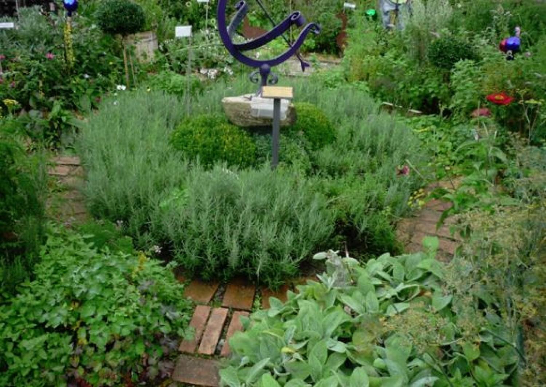 Emésztést elősegítő gyógynövények és fűszerek a kiskertünkből