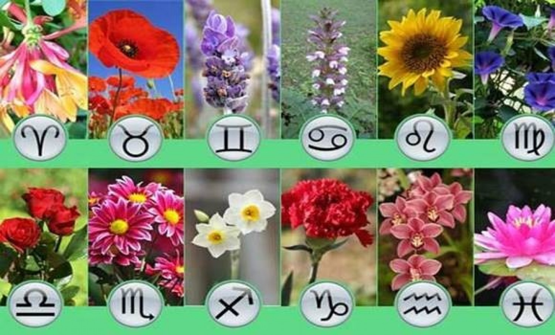 Nézd meg a virág horoszkópod, sok mindent megtudhatsz magadról