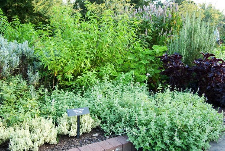 Zöldségek, fűszer- és gyógynövények a pihenőkertben