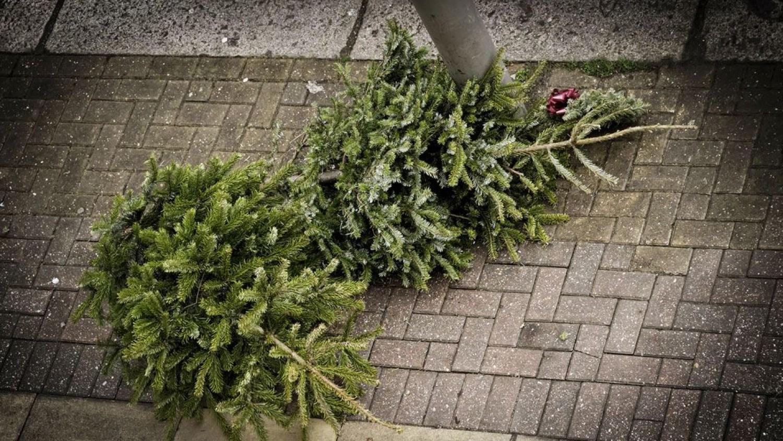 Ne dobd ki a karácsonyfát - 4 tipp, hogy hogyan hasznosítsd a kertedben