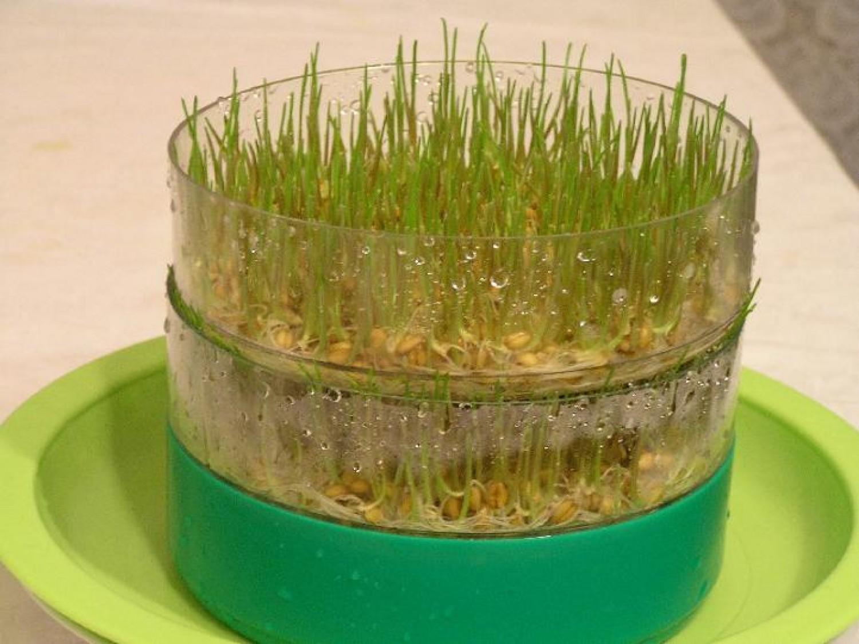 Kertészkedj a konyhában: csíráztatás 7 lépésben