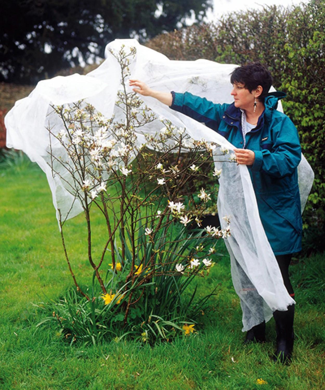 A jövő héten komoly mínuszokra kell készülni - így védd meg a növényeidet