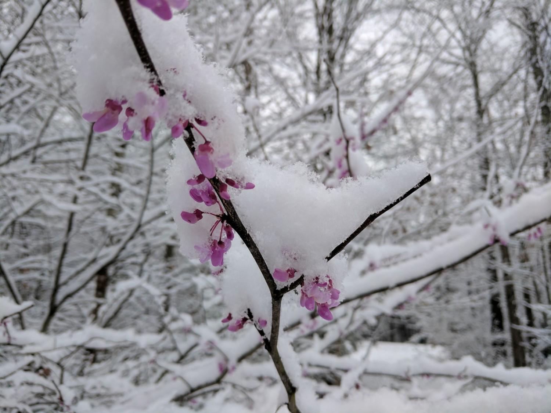 Hatalmas károkat okozott a márciusi fagy