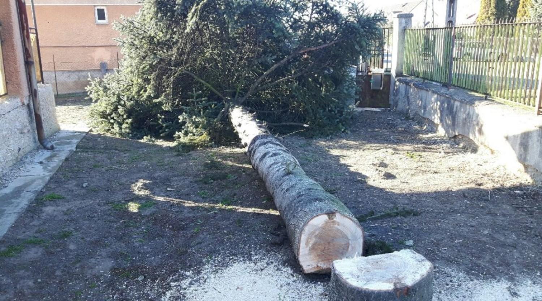 Elszálltak az árak a kertészeti munkáknál  - főleg a fakivágásnál!