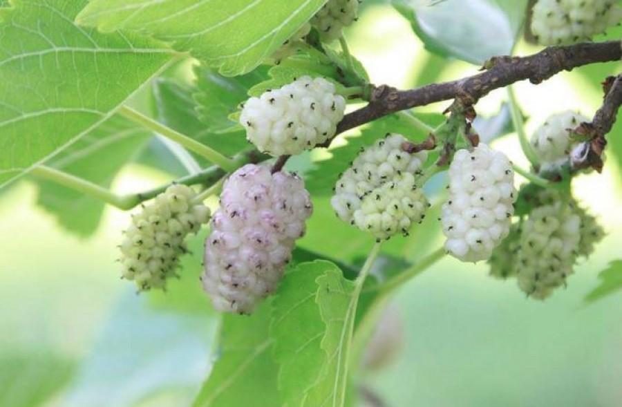 Az egyik legegészségesebb magyar gyümölcs, de van, aki meg sem meri enni