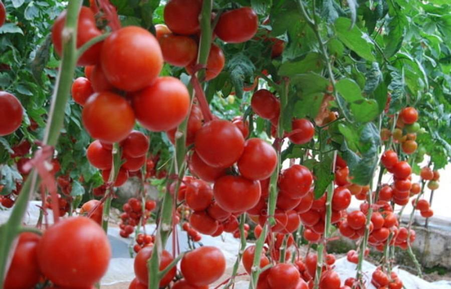 A Te konyhádban is ott van a csodaszer! Bőséges termés, egészséges növények!