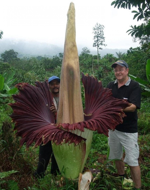 Ez a világ legnagyobb virága