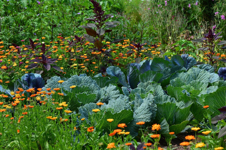 Dupla termést hozhatnak ezek a növénytársítások!