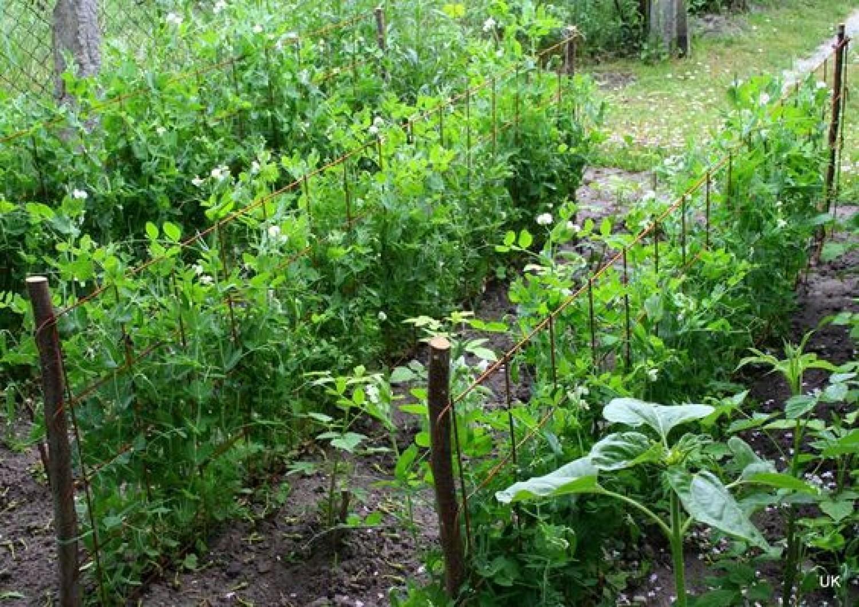 Ha ezt nem teszed meg, hiába locsolod a kertet!