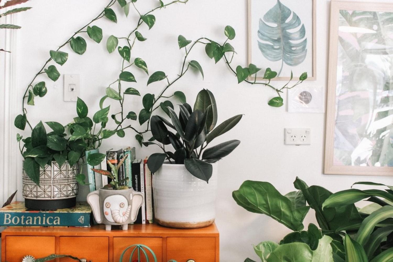Feng shui és a szobanövények