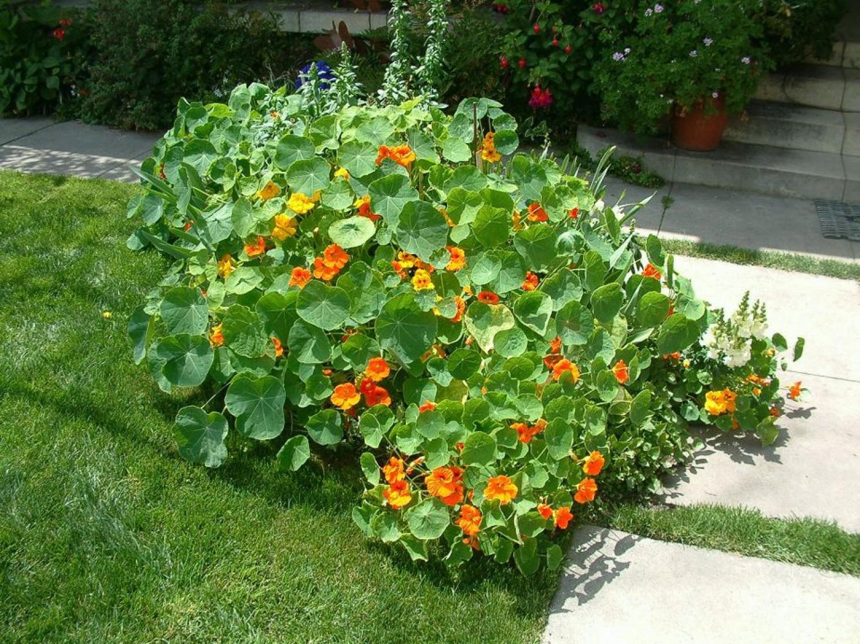 Kerti sarkantyúka: minden kertben ott kellene legyen