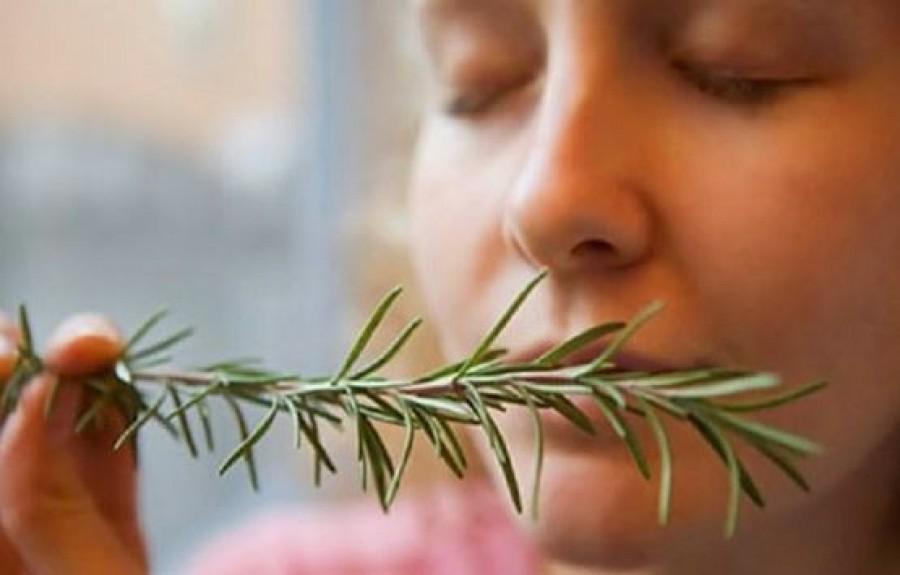 Egy közismert fűszernövény, aminek az illata javítja a memóriádat