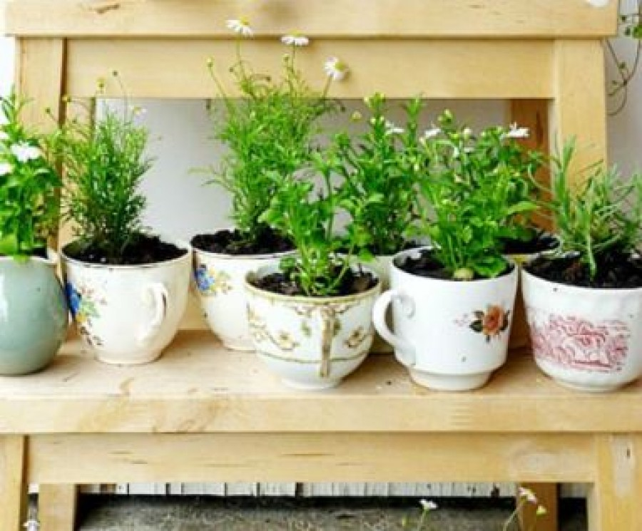 Gyógy- és fűszernövények, amiket egész évben tarthatsz a lakásban