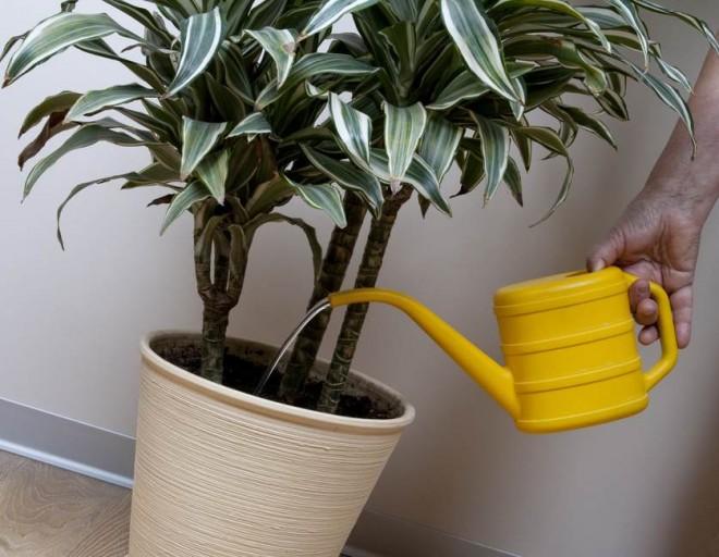 Egy filléres trükk, hogy télen is szép legyen a szobanövényed!