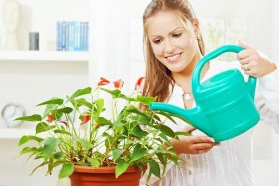 Ez a 9 természetes műtrágya gyönyörűvé teszi a növényeket!
