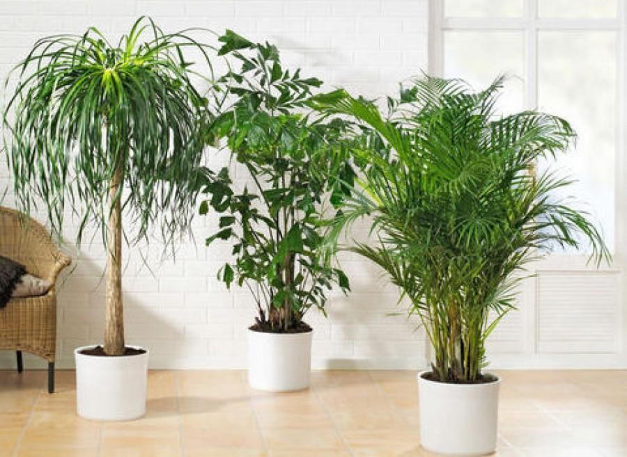 Itt vannak a legjobb légtisztító szobanövények!