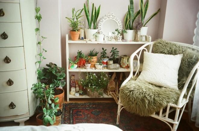 Alvásjavító szobanövények