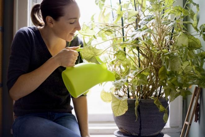 Ezzel locsold a szobanövényeket a téli hónapokban, hogy egészségesek legyenek!