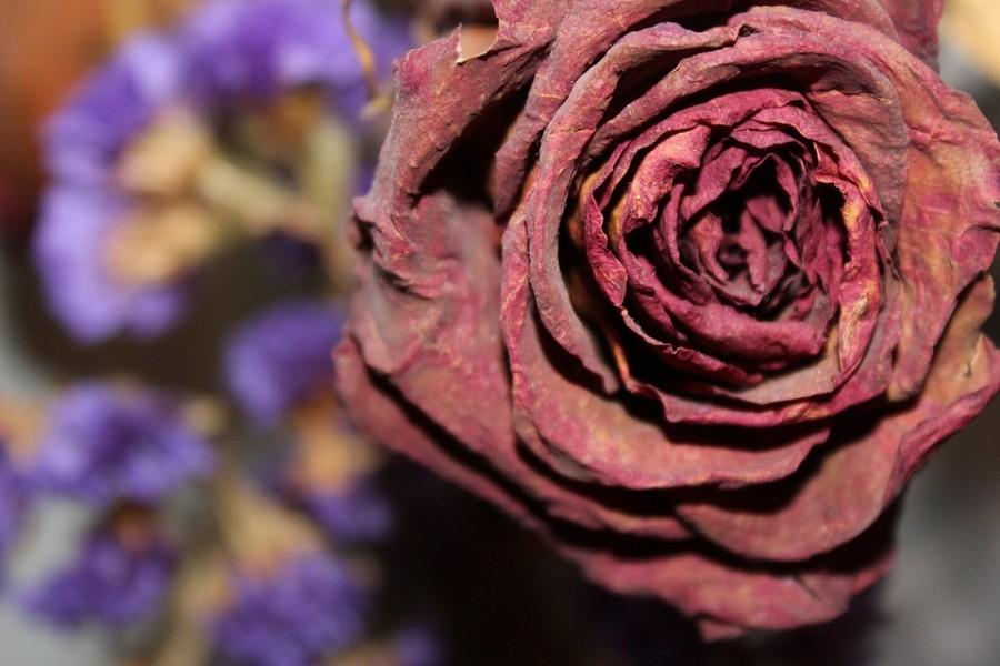 A szárított rózsák ideje lejárt