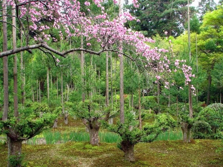 5 kert, amit látnod kell!