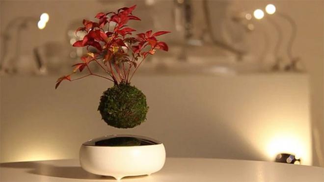 Lebegnek a bonsai-ok! Nagyon jó!