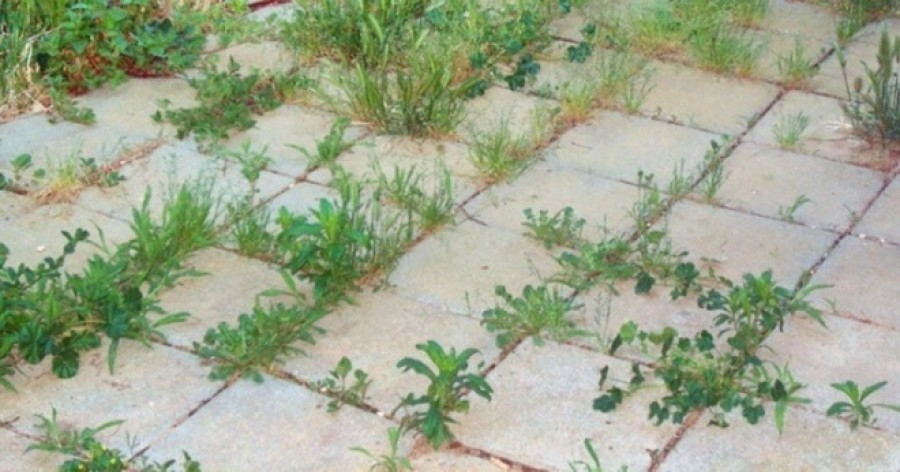 9 mód, hogy sose nőjön több gyom a kertedben