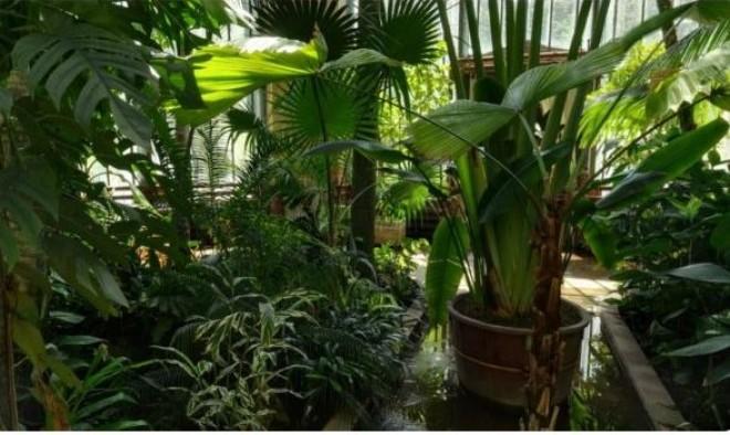 Lépj be a Füvészkertbe, és nézz körül a különleges 360 fokos videóval!