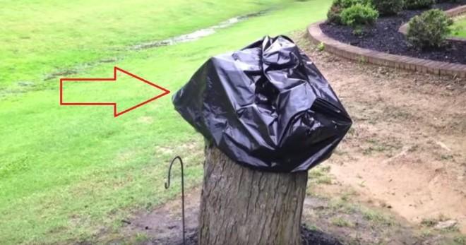 A férj kivágta az öreg fát a kertben… 2 hét múlva eltávolítja a szemeteszsákot… ZSENIÁLIS!