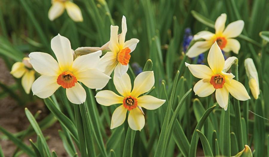 Ez a legfontosabb őszi tennivaló, ha tavasszal gyönyörú virágokat szeretnénk!