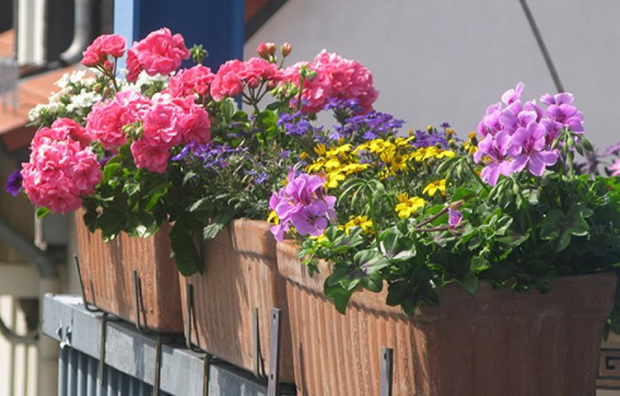 Halovány virágok, sárguló levelek? Nézd meg milyen tápanyag hiányzik a növényednek!