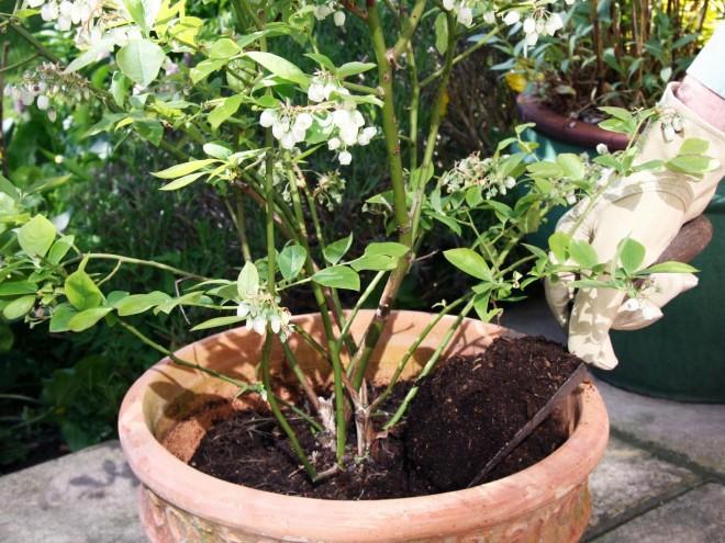 Növényápolási kisokos 1. rész