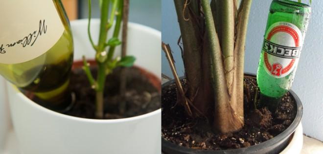 Nincs több túlöntözött vagy kiszáradt növény, ha ismered ezt a trükköt!
