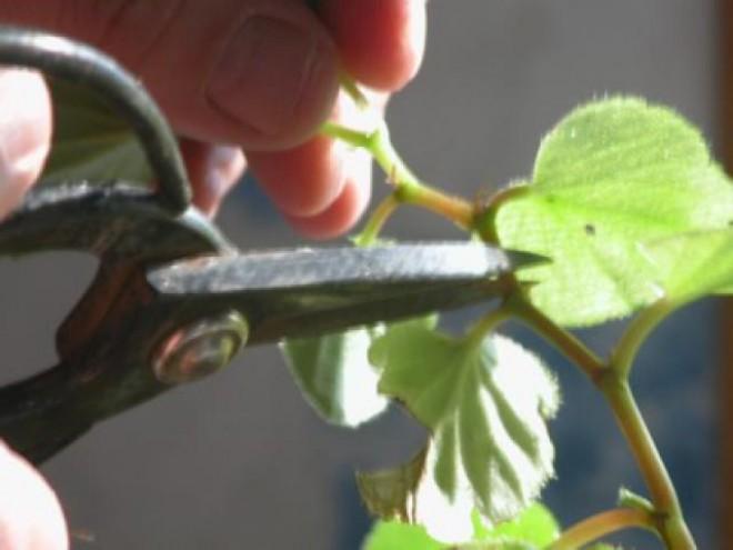 Növényápolási kisokos 5. rész