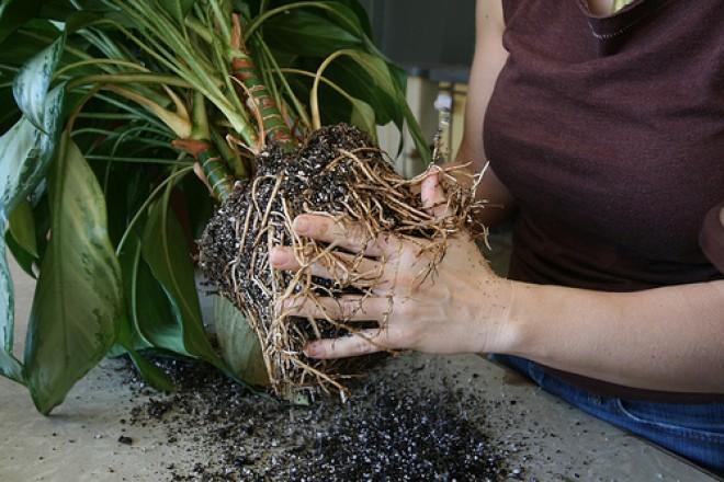 Növényápolási kisokos 4. rész
