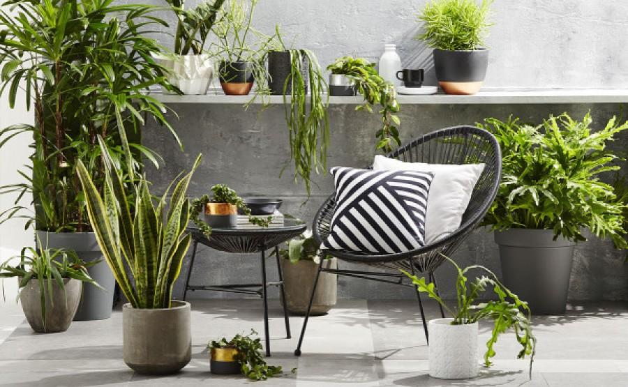Hogyan válaszd ki a tökéletes szobanövényt?