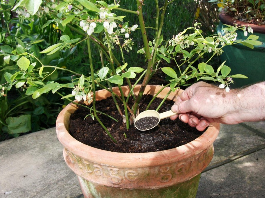 Így tápláld a növényeidet, hogy ne éhezznek