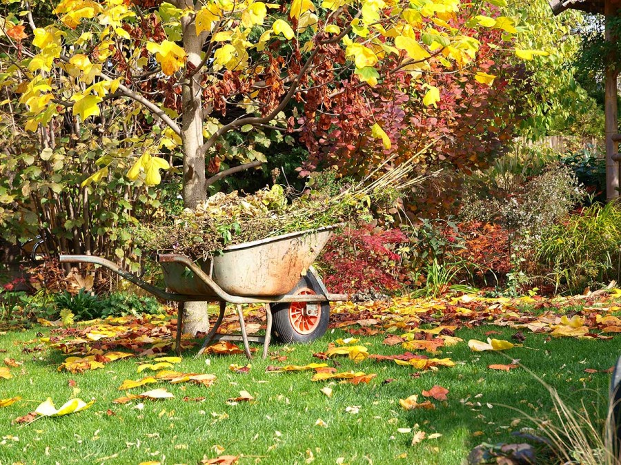 A kerttulajdonosok legnagyobb dillemája: Díszkert vagy vetemény?