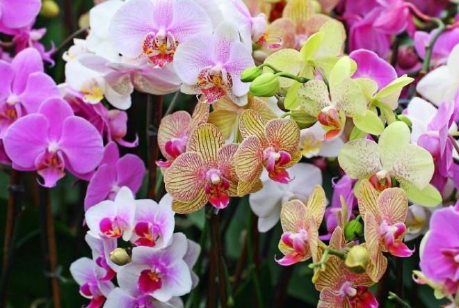 Így neveld az orchideád - kezdőknek is garantált siker!